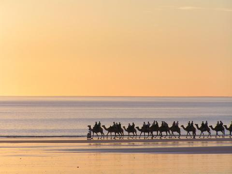 WHilst in Broome  why not take a camel ride the day before your tour.
